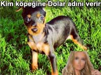 Kim köpeğine Dolar adını verir Dollar