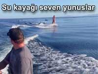 Su kayağı ve sörf sever yunuslar