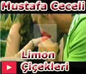 mustafa ceceli limon �i�ekleri vidyo klipi video klip dailymotion izle