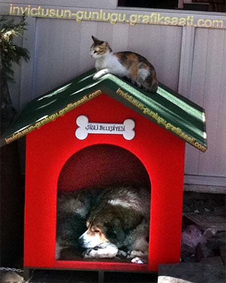 Şişli belediyesi köpek barınağı kedi köpek dostluğu