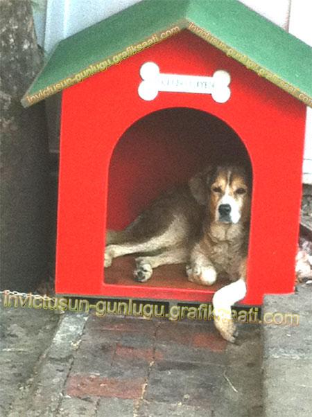 Şişli Belediye Başkanı Mustafa Sarıgül PetFest tanıtımı ve sahipsiz sokak hayvanları. Aslan ve kulübesi