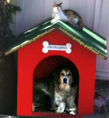 Başıboş sokak köpekleri için barınak ve kedi köpek dayanışması